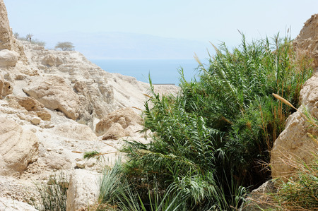 Mountains in the Ein Gedi Nature Reserve on the shores of the Dead Sea in Israel.