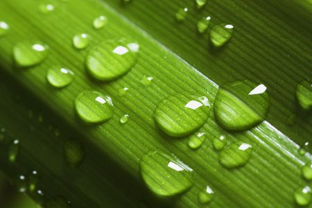 Dripped water on green sheet Stock Photo - 4596960