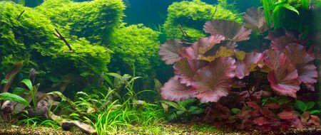 Tropical aquarium (panorama)