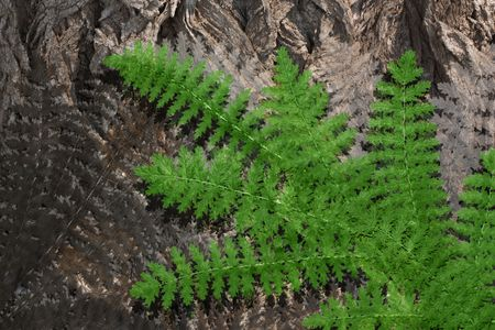 Leaf fern on a background of a tree trunk Stock Photo - 5871251
