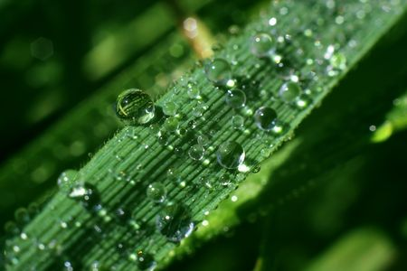 dripped: Dripped water on green sheet