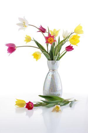 Field tulips  Stock Photo