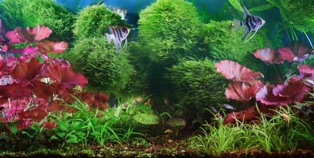 Decorative aquarium Stock Photo