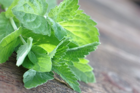 Fresh spearmint.