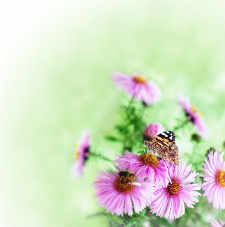 Butterfly on magenta flower with green blur background Stock Photo