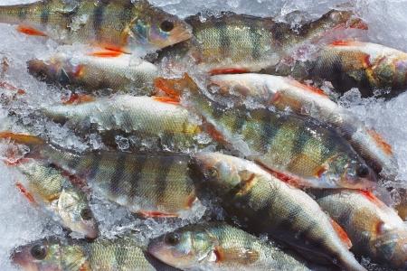 Winter fishing Stock Photo - 17226587