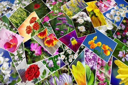 Flowers collage. Beautiful multicolored closeup image. Stock Photo