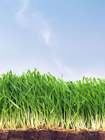 Fresh shoots of spring grass Stock Photo