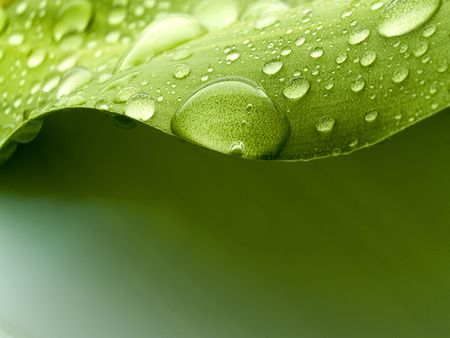 Water drops on a green plant