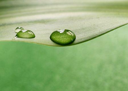 Plant Blatt  Lizenzfreie Bilder