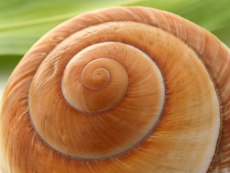 Spiral Shell  Lizenzfreie Bilder