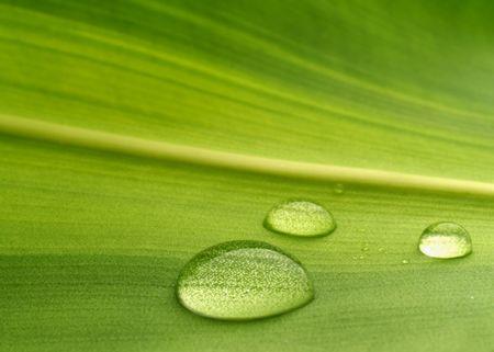 Wassertropfen auf einer Pflanze Blatt  Lizenzfreie Bilder