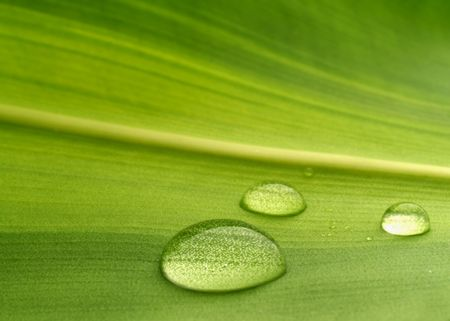 Water drops on a plant leaf