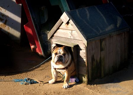 Bulldog in its kennel Stock Photo