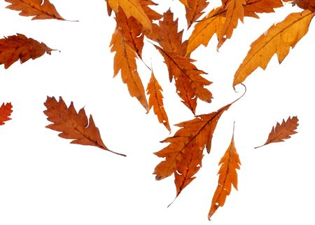 Falling Leaves isolated on white