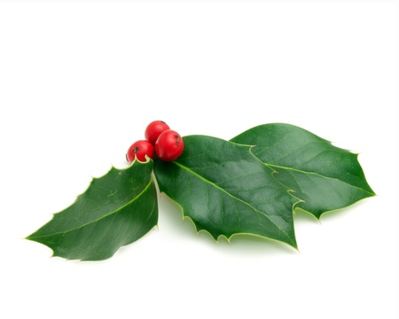 holly leaves: Holly Sprig on white