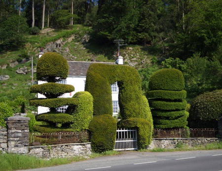 topiary: Topiary clipped bushes Stock Photo