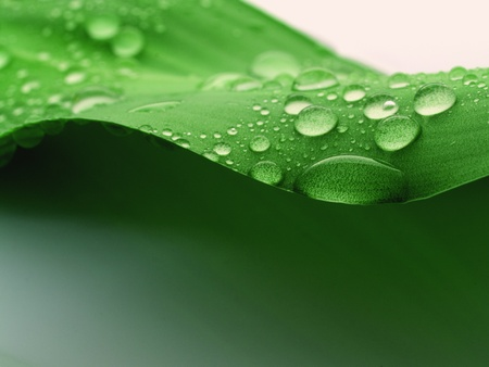 wet leaf: water drops on a plant leaf Stock Photo