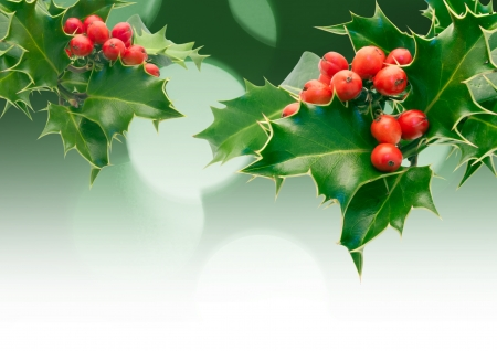 diffused: Holly Sprigs with diffused lights