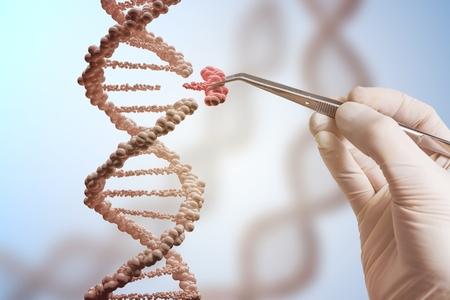 Concepto de ingeniería genética y manipulación genética. La mano está reemplazando parte de una molécula de ADN. Foto de archivo