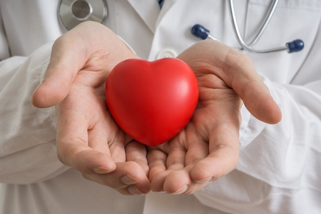 Heart transplantation concept. Doctor holds red heart model in hands.