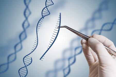 Concepto de manipulación de ingeniería genética, OMG y genes. La mano está insertando la secuencia de ADN.