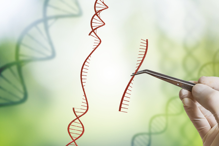 modified: Hand is inserting sequence of DNA. Genetic engineering, GMO and Gene manipulation concept. Stock Photo