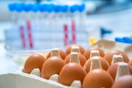 Eggs are tested in laboratory. Food quality control concept.