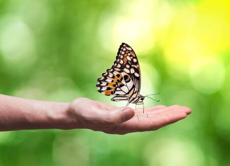 Beautifull butterfly is sitting on hand in nature.