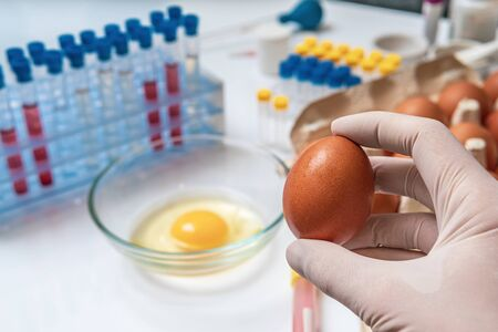 Food quality testing concept. Scientist is holding egg in hand in laboratory. Stock fotó