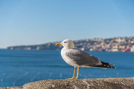 Seagull bird is standing near sea.