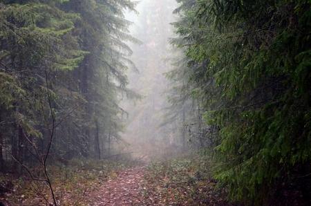 suspenso: niebla en el bosque de la primavera