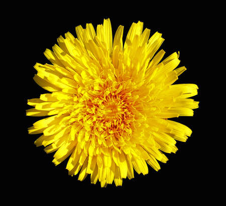Abstract yellow flower over black background photo