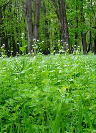 thickets: Thicket of the forest Stock Photo