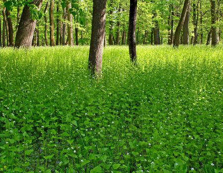 the thicket: Thicket of the forest Stock Photo