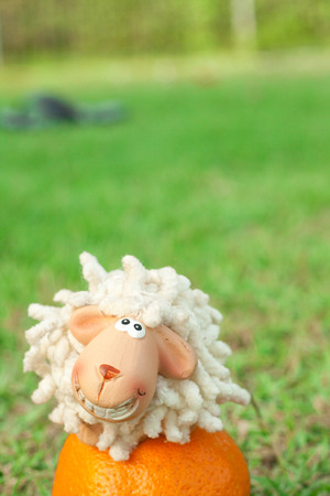 kiddy: Smiling sheep sit on orange
