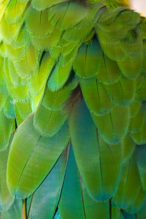 Beautiful of bird feather background 写真素材