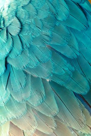 Beautiful of bird feather background Archivio Fotografico