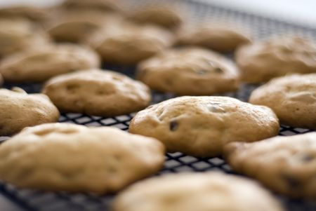 Close up of fresh home made cookies on a cooling rack.
