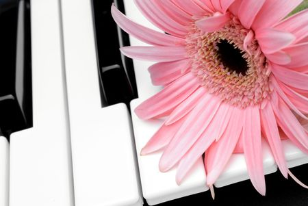 Closeup of a pink flower on a piano keyboard photo