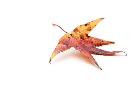 Colorful autumn leaf on white Banco de Imagens