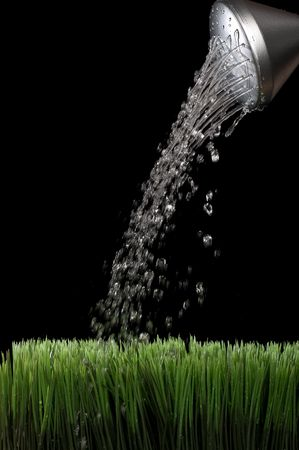 Vertical image of water sprinking from a silver garden watering jug onto green grass with a black background