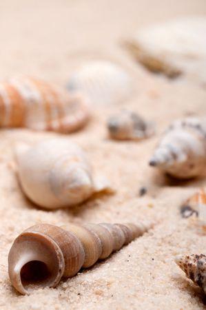 Shallow focus vertical macro of seashells on sand