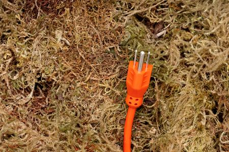 An orange extension cord on moss