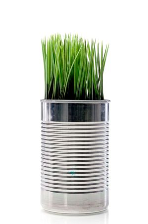 Green grass growing from a recycled aluminum can on white