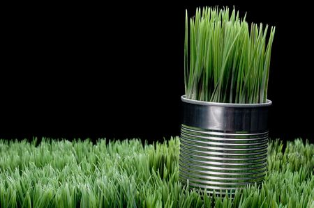 Green grass growing from a recycled aluminum can on grass Stock Photo - 5711877