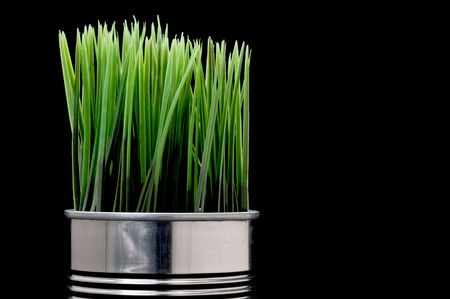 Green grass growing from a recyled aluminim can Stock Photo