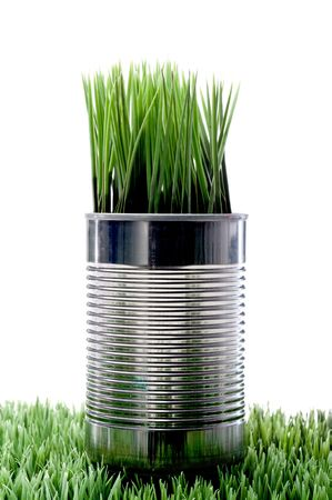 Green grass growing from a recycled aluminum can on grass Stock Photo - 5893029