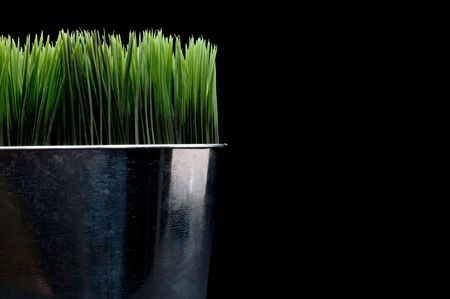 Horizontal close up of green grass in a metal container Stock Photo - 6242532