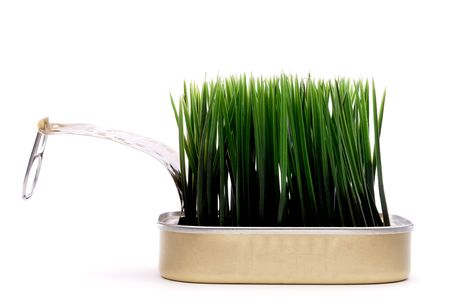 sardine can: Horizontal image green grass growing from a sardine can on white:recyle